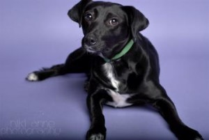 Shoals PAWS - Pets Are Worth Saving